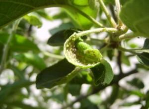 Bitki Biti İlaçlama