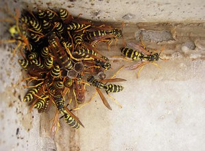 Arı Yuvası İlaçlama